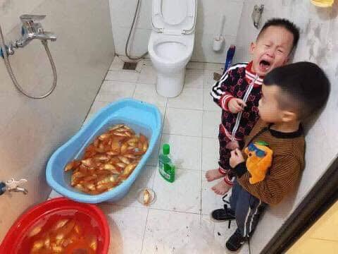 Dùng nước lau sàn tắm cho cá chép trước ngày ông Công ông Táo, gia đình nhận cái kết đắng-4