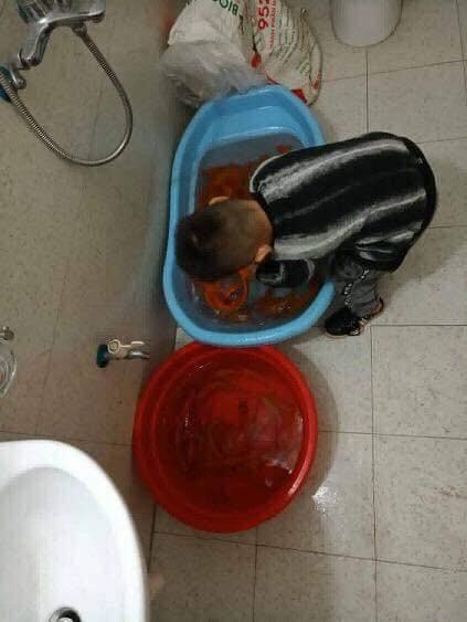 Dùng nước lau sàn tắm cho cá chép trước ngày ông Công ông Táo, gia đình nhận cái kết đắng-3