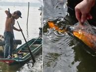 Khổ như cá chép ngày tiễn ông Táo: Vừa được phóng sinh đã bị 'đội quân' chèo thuyền chờ sẵn để chích điện