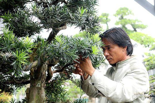 Ngắm vườn bonsai cực chất giá trăm tỷ đồng ở Bình Định-10