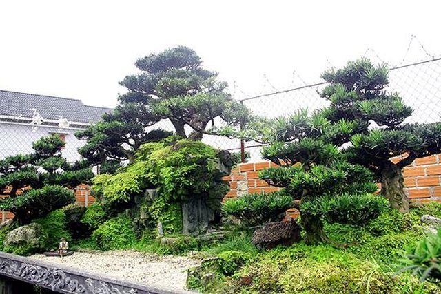 Ngắm vườn bonsai cực chất giá trăm tỷ đồng ở Bình Định-8