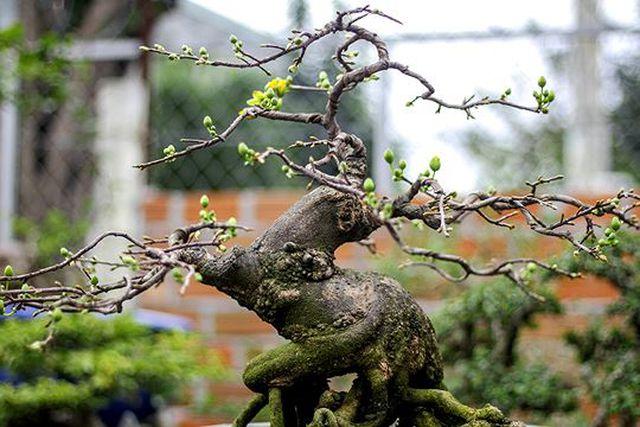 Ngắm vườn bonsai cực chất giá trăm tỷ đồng ở Bình Định-9