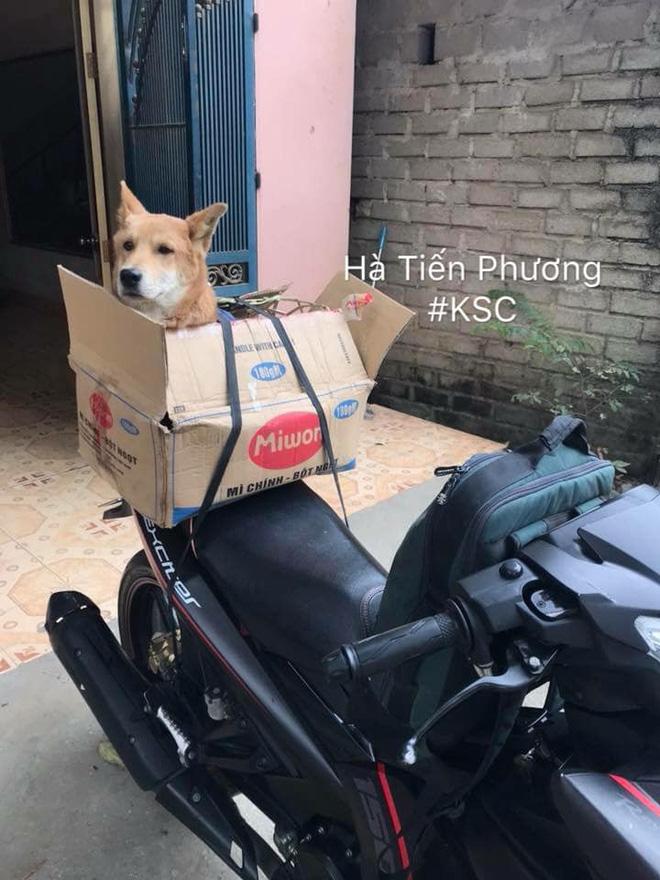 Theo chủ về quê ăn Tết, chú chó say xe tới mềm nhũn nhưng dân mạng lại bật cười vì 1 điều-11