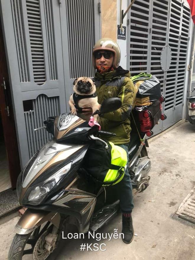Theo chủ về quê ăn Tết, chú chó say xe tới mềm nhũn nhưng dân mạng lại bật cười vì 1 điều-15