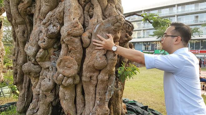 Cây me 2 tỷ đồng, cây xoài 500 triệu tại chợ hoa Sài Gòn-3