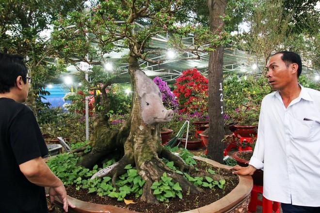 Cận cảnh cây khế đầu heo có giá nửa tỷ đồng được bày bán thu hút người dân Sài Gòn-1
