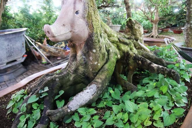 Cận cảnh cây khế đầu heo có giá nửa tỷ đồng được bày bán thu hút người dân Sài Gòn-10