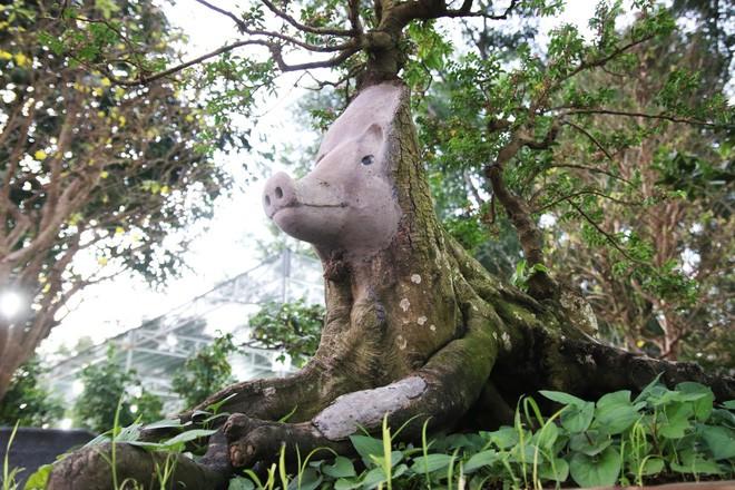 Cận cảnh cây khế đầu heo có giá nửa tỷ đồng được bày bán thu hút người dân Sài Gòn-12