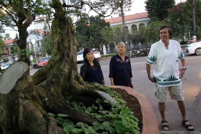 Cận cảnh cây khế đầu heo có giá nửa tỷ đồng được bày bán thu hút người dân Sài Gòn-14