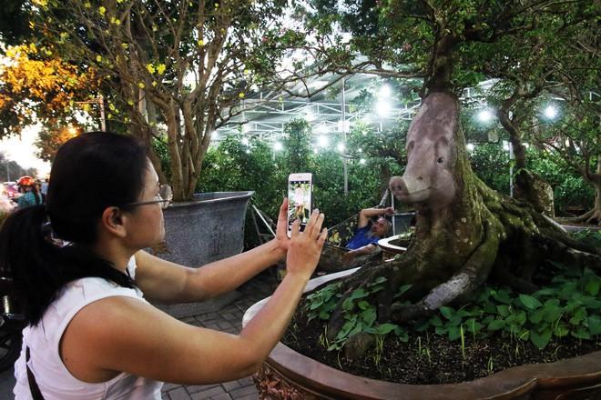Cận cảnh cây khế đầu heo có giá nửa tỷ đồng được bày bán thu hút người dân Sài Gòn-17