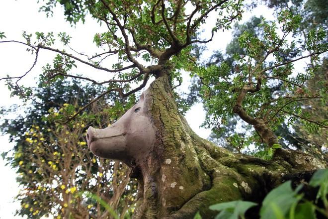 Cận cảnh cây khế đầu heo có giá nửa tỷ đồng được bày bán thu hút người dân Sài Gòn-2
