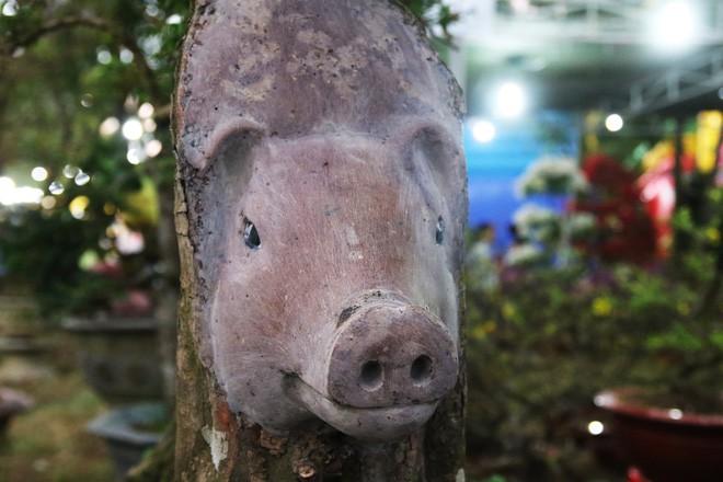 Cận cảnh cây khế đầu heo có giá nửa tỷ đồng được bày bán thu hút người dân Sài Gòn-7