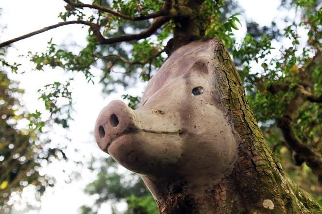 Cận cảnh cây khế đầu heo có giá nửa tỷ đồng được bày bán thu hút người dân Sài Gòn-9