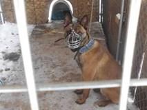 Chú chó bị chủ bỏ mặc ngoài trời rét -22 độ C trong những ngày lạnh kinh hoàng tại Mỹ