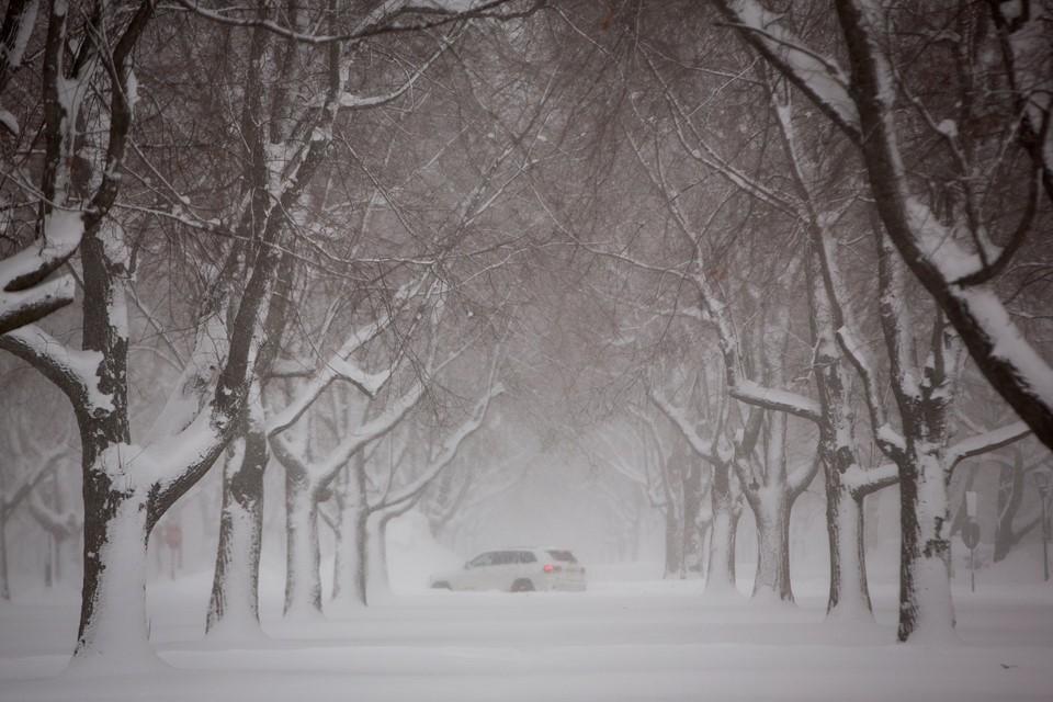 Chú chó bị chủ bỏ mặc ngoài trời rét -22 độ C trong những ngày lạnh kinh hoàng tại Mỹ-2