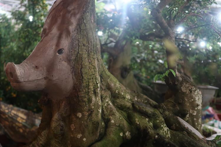 Cận cảnh cây khế hình đầu heo được rao bán giá nửa tỷ đồng ở Sài Gòn-2