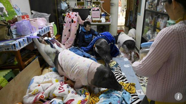 Kỳ lạ người phụ nữ độc thân bằng lòng hy sinh mọi thứ để nuôi 4 chú lợn, cho ở phòng ngủ lớn-1