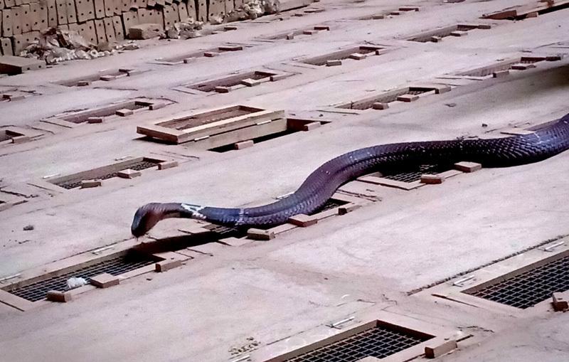 Tóm cổ rắn độc: Ông lão ôm vàng ròng đổi lấy 'siêu xe'-3