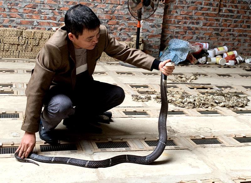 Tóm cổ rắn độc: Ông lão ôm vàng ròng đổi lấy 'siêu xe'-1