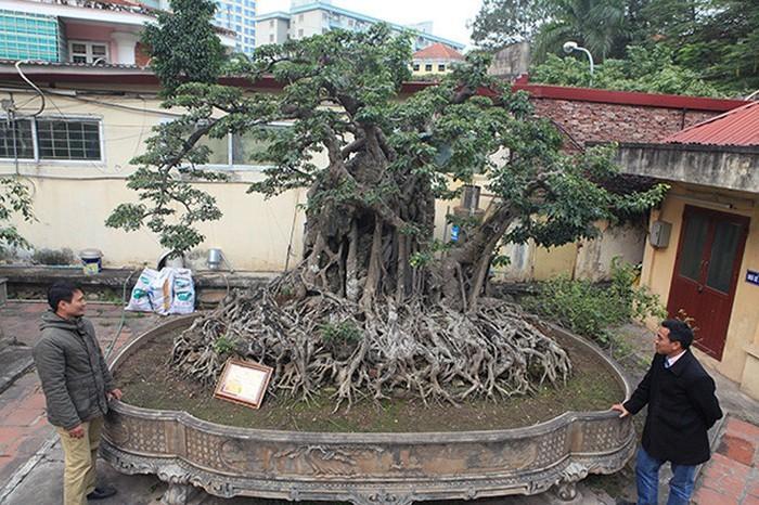 Hai cây sanh khủng của doanh nhân bí ẩn ở Hà Nội-1