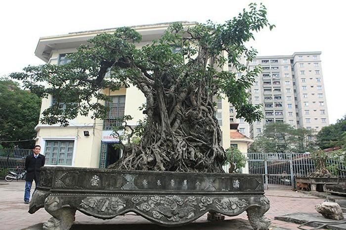 Hai cây sanh khủng của doanh nhân bí ẩn ở Hà Nội-10