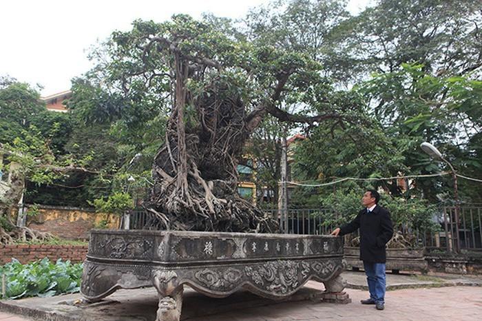Hai cây sanh khủng của doanh nhân bí ẩn ở Hà Nội-11