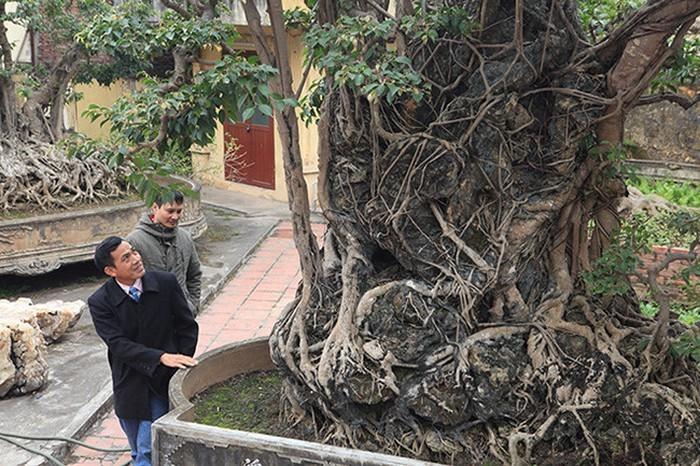 Hai cây sanh khủng của doanh nhân bí ẩn ở Hà Nội-12