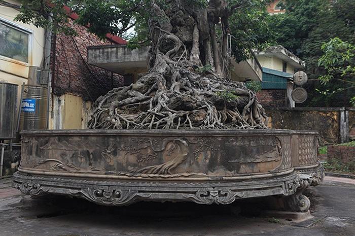 Hai cây sanh khủng của doanh nhân bí ẩn ở Hà Nội-5