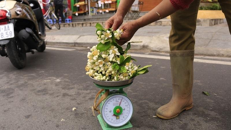Đào phai, mai tàn, dân Hà thành chơi hoa bày đĩa nửa triệu/kg-6