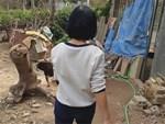Toàn cảnh vụ sát hại nữ sinh giao gà tại tỉnh Điện Biên-11