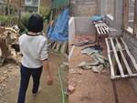 Vụ nữ sinh bán gà bị giết: Nghi ngờ có nhiều người tham gia-5