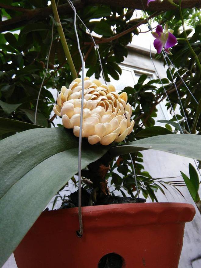 Sự thật về bông hoa trắng lạ, không ai biết tên đang gây xôn xao mạng xã hội-2