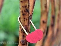 Ảnh: Những ổ khóa tình yêu trên cầu Long Biên
