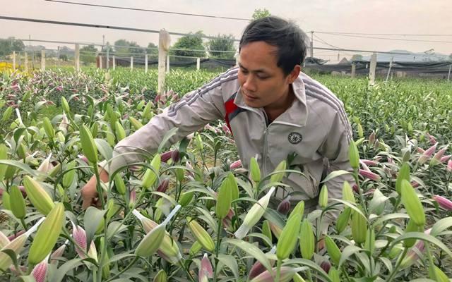Vườn hoa tiền tỷ của chàng công nhân gác tàu xứ Thanh-2