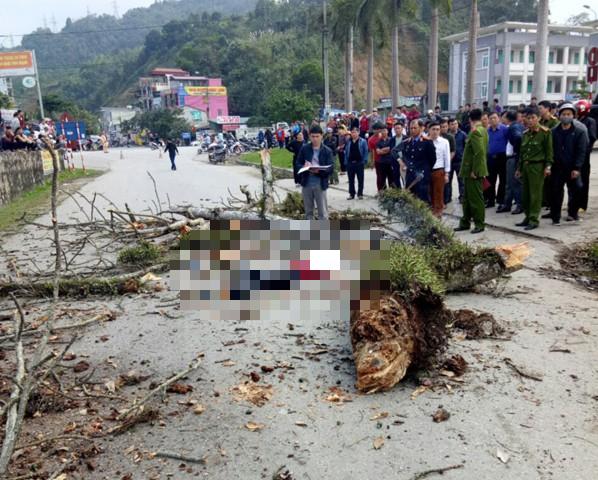 Danh tính nam thanh niên đi bộ bị cành cây gạo gãy rơi trúng tử vong ở Hà Giang-1