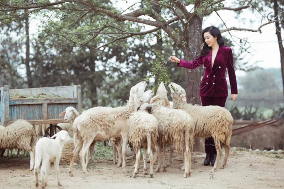 Hoa hậu Đền Hùng Giáng My bình yên vui đùa cùng đàn cừu-3