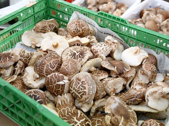 Giá gần 10 triệu đồng/kg, nấm hương Nhật được bà nội trợ Việt săn lùng-3