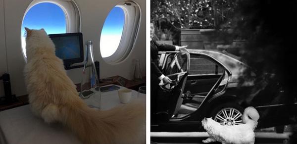 9 điều ít người biết về cuộc sống riêng tư của huyền thoại thời trang Karl Lagerfeld-2