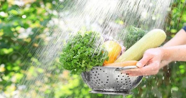 Rửa rau như thế nào để loại bỏ thuốc trừ sâu gây hại-2