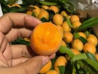 Kỳ lạ loại quả ăn vặt giá 'chát', chưa kịp về đã hết hàng