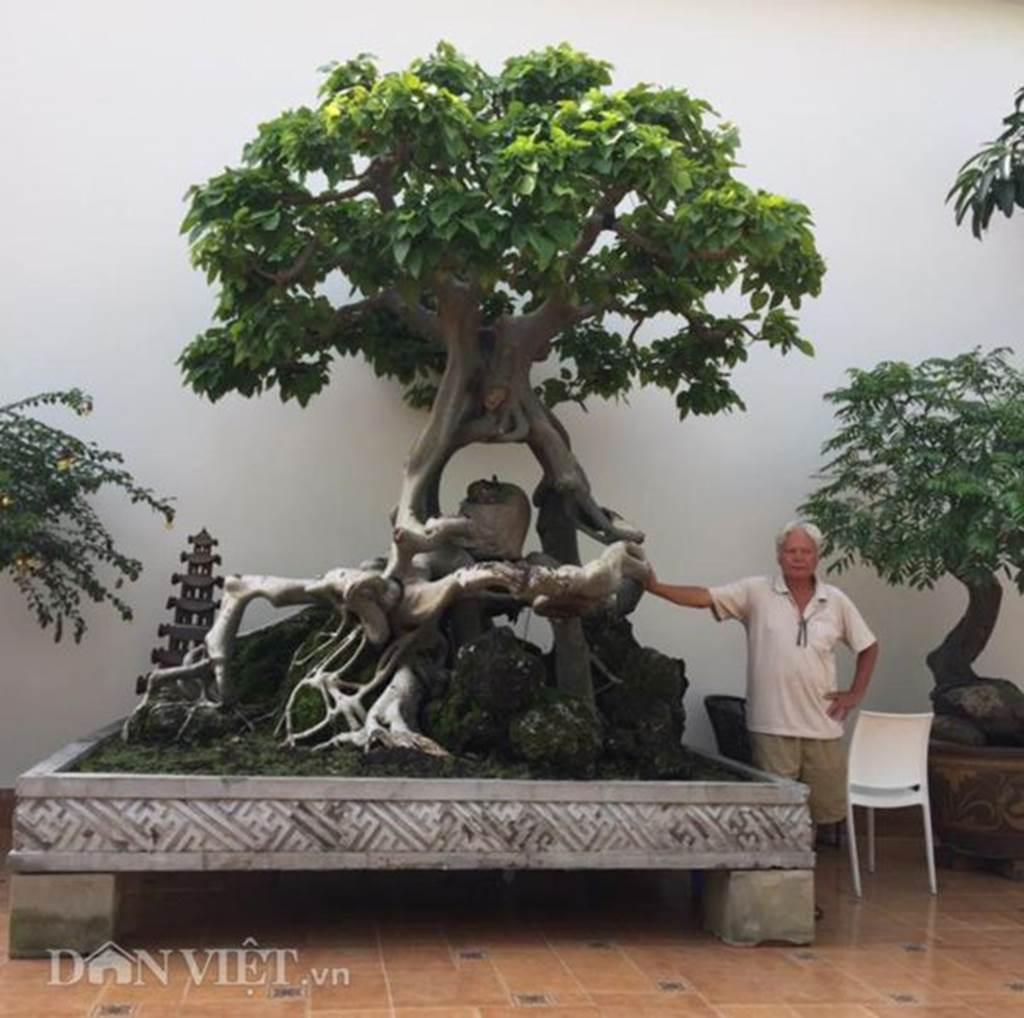 Xôn xao Nam Định: Cây sanh cổ bán kèm cổng nhà giá 6.000 USD?-5
