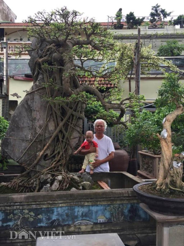 Xôn xao Nam Định: Cây sanh cổ bán kèm cổng nhà giá 6.000 USD?-6
