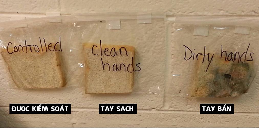 Phương pháp giáo dục 3 miếng bánh mỳ cô giáo Mỹ khiến mọi người nhận ra tác hại khủng khiếp của việc không rửa tay-1