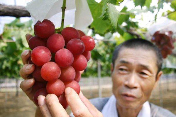 Choáng với 10 loại trái cây đắt nhất thế giới, 1 quả chuối có giá hơn 200 triệu đồng-8