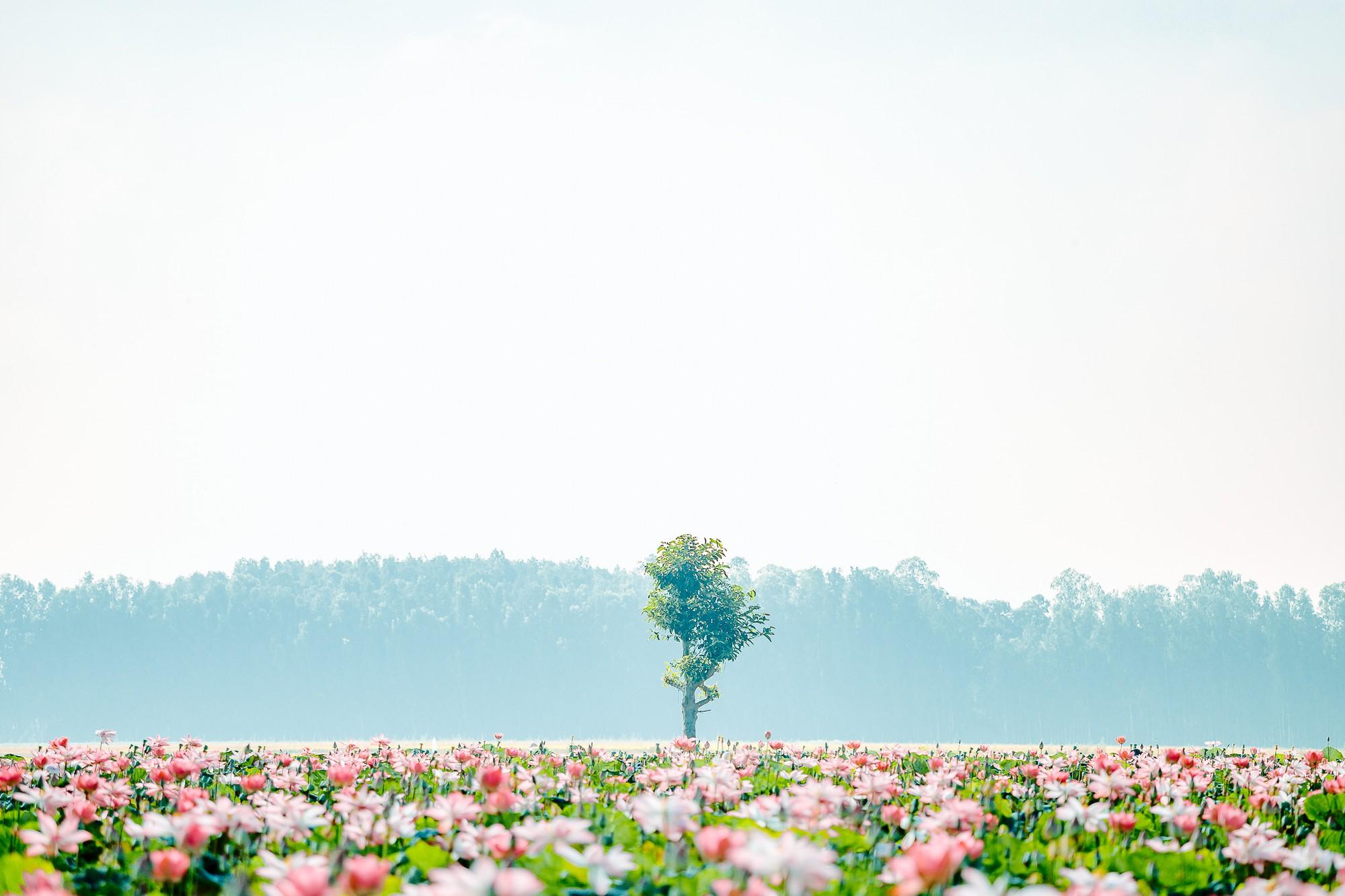 Đã lùng ra địa chỉ cánh đồng sen rộng bát ngát tại An Giang: Thiên đường sống ảo là đây chứ đâu nữa!-1
