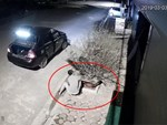 Cặp đôi đánh ô tô trộm đào lúc nửa đêm: 1 ngày sau, vợ đeo khẩu trang trả cây đã được tỉa gọn về vị trí cũ-2