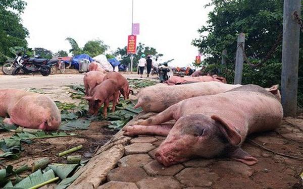 Chọn thịt lợn sạch theo hướng dẫn của chuyên gia trước tình hình dịch tả lợn châu Phi bùng phát-2