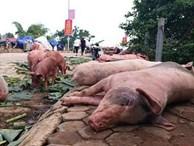 Chọn thịt lợn sạch theo hướng dẫn của chuyên gia trước tình hình dịch tả lợn châu Phi bùng phát