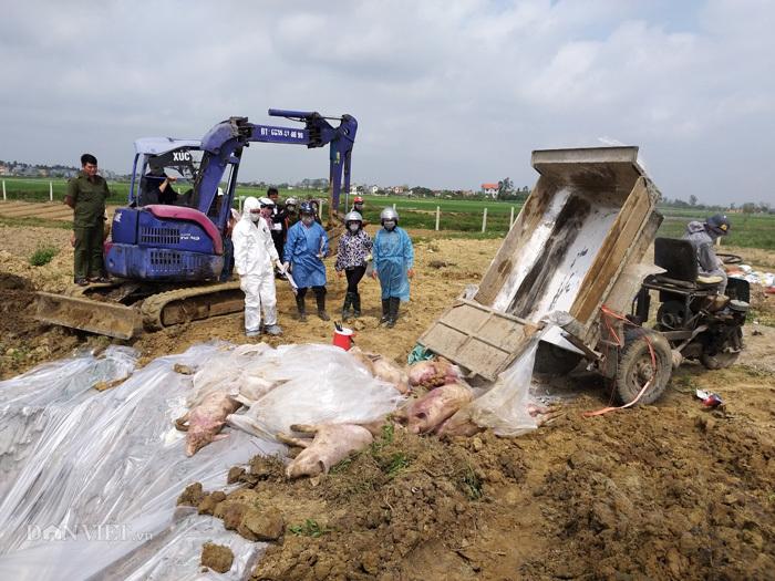 Dịch tả lợn lan ra 9 tỉnh, giá lợn hơi giảm mạnh-1
