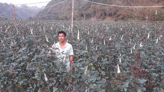 Rời Thủ đô lên phố núi trồng hoa hồng, chàng trai rinh gần 1 tỷ mỗi năm-1